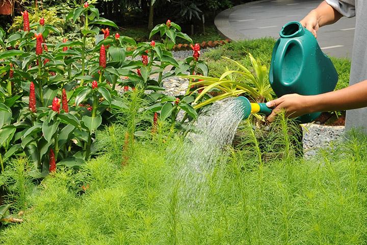 paisagismo-jardinagem-terceirizado
