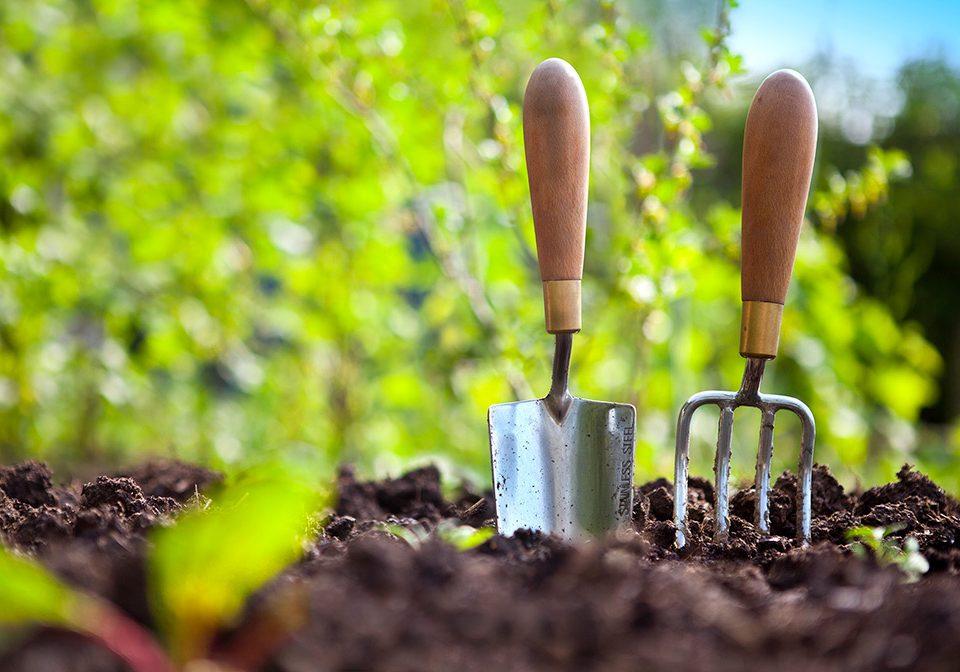 serviços de jardinagem