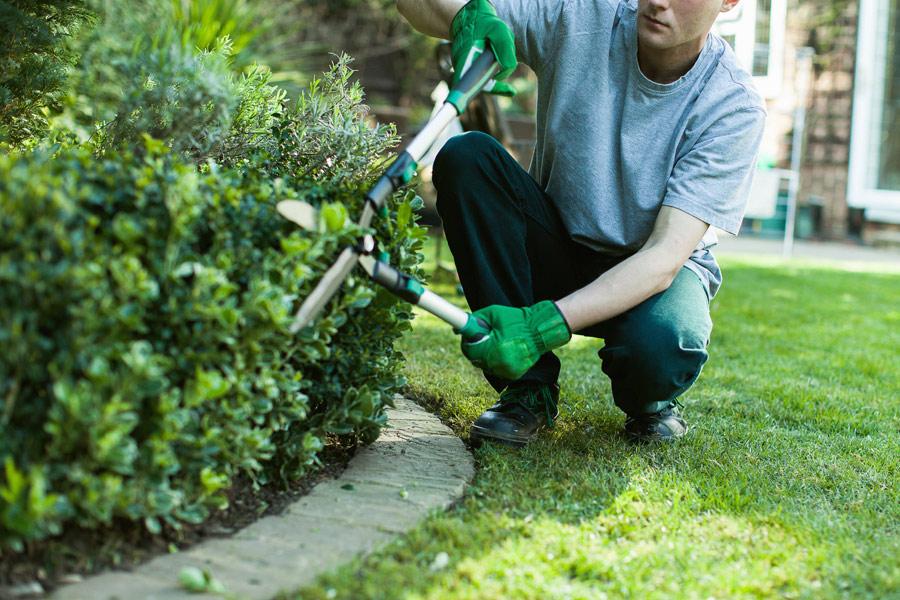 terceirizar os serviços de jardinagem